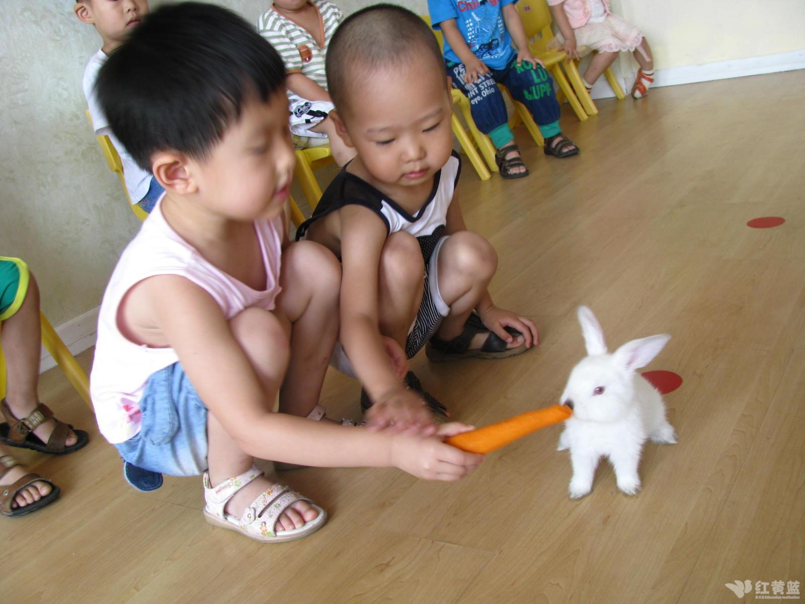 小兔子吃萝卜图片_