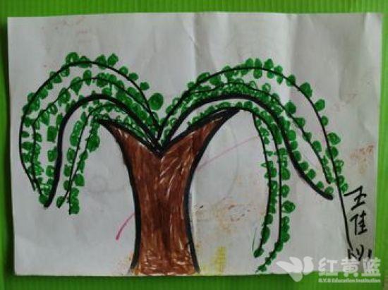 春天到了,柳树长出小树芽了!