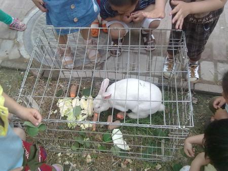 小兔子吃东西的照片_宝贝喂小兔子吃东西宝版相册江阴论坛暨