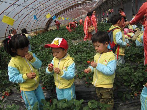 红黄蓝警苑新居幼儿园《采摘草莓》