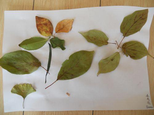 树叶粘贴画图片大,手工树叶 粘贴画,树叶或鲜花做粘贴画