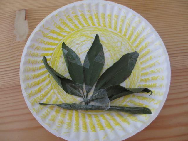 幼儿园纸盘装饰图片展示下载;