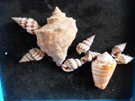 美术作品——手工贝壳