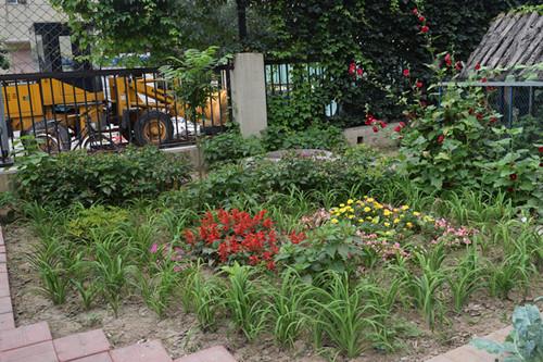 幼儿园菜园丰收啦图片