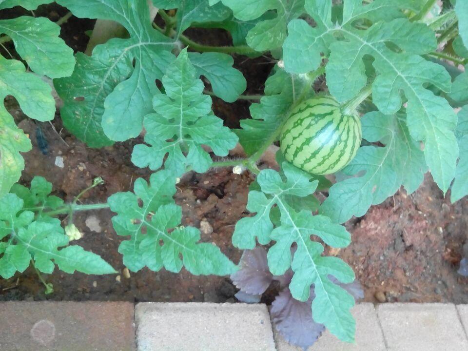 背景 壁纸 花 绿色 绿叶 树叶 植物 桌面 960_720